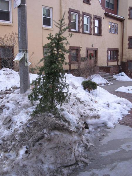 sad-tree-450x600